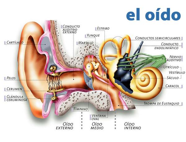 Cómo funciona un audífono